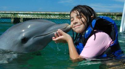 Dolphinarium in Pattaya.