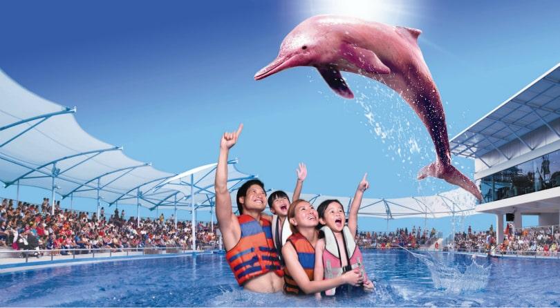 Dolphinarium in Pattaya