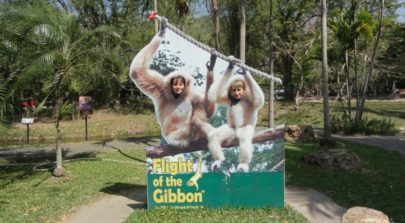 Flight Gibbon