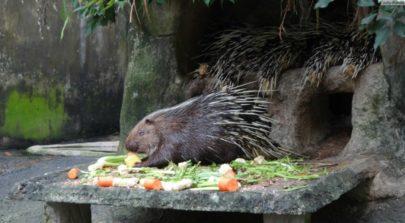 Zoo Khao Kheo