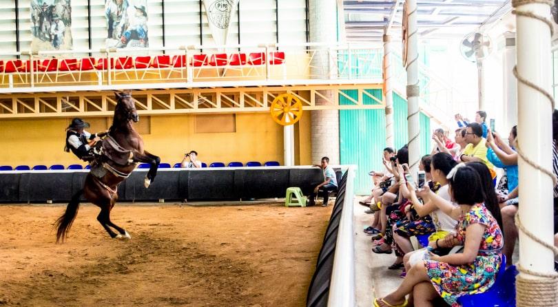 Pipo Pony Club Pattaya