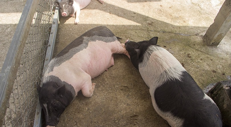 Cafe Farm with animals in Pattaya